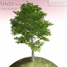 tree 001 beech 3D Model