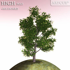 tree 002 linden 3D Model