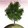 00 51 35 834 tree 003 main 4