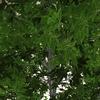 00 51 36 31 tree 003 z 4