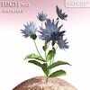 00 51 43 28 flower 029 main copy 4