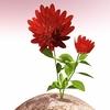 00 51 43 528 flower 032 main 4