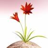 00 51 43 601 flower 033 main 4