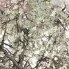 00 52 00 552 tree 006 z 4