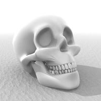 Skull detail 3D Model