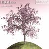 00 55 52 685 tree 005 main 4