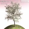 00 55 54 210 tree 006 main 4