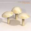 00 57 25 496 mushrooms3 4