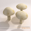 00 57 26 148 mushrooms6 4