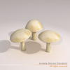 00 57 26 206 mushrooms7 4