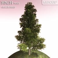 tree 008 spruce 3D Model