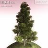 00 58 15 383 tree 008 color 4
