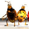 00 59 47 642 ladybug3 4