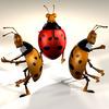 00 59 47 805 ladybug5 4