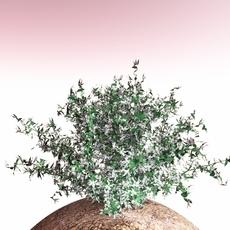 shrub 018 3D Model