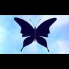01 04 09 60 butterfly 06 4