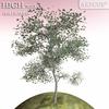 01 04 50 998 tree 012 main 4