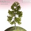01 04 52 24 tree 013 main 4