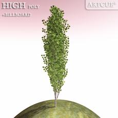 tree 014 poplar 3D Model