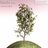 tree 015 3D Model