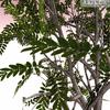 01 04 53 34 tree 015 zz 4