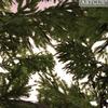 01 04 54 453 tree 016 zz 4