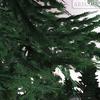 01 04 55 132 tree 017 zz 4
