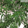 01 04 55 846 tree 018 zz 4