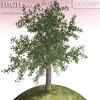 01 04 56 161 tree 019 main 4