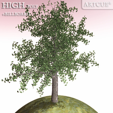 tree 019 oak 3D Model
