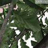 01 04 56 417 tree 019 zz 4