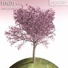 01 05 24 185 tree 011 main 4