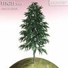 01 05 24 406 tree 017 main 4