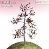 01 05 35 595 tree 021 main 4