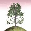 01 05 35 991 tree 024 main 4
