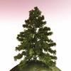 01 05 36 159 tree 026 main 4