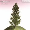 01 05 36 71 tree 025 main 4