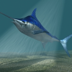 Blue marlin toon fish 3D Model
