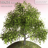 01 08 24 194 tree 027 main 4