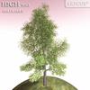 01 08 24 298 tree 028 main 4