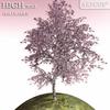 01 08 24 469 tree 030 main 4