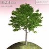 01 08 24 546 tree 031 main 4