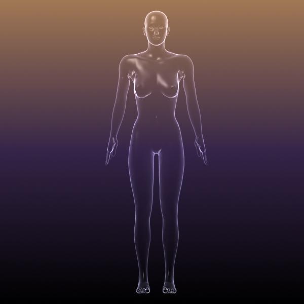 Woman anatomy body
