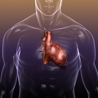 Heart in a Human Body 3D Model