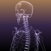 Skeleton of a Human: X-Ray scan RenderReady 3D Model