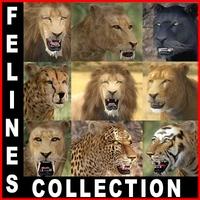 Wild Felines Pack 3D Model