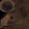 01 30 59 901 bear 05 4