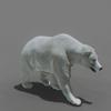 01 31 00 526 bear polar 01 4