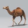 01 31 12 189 camel 02 4