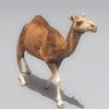 01 31 12 263 camel 03 4